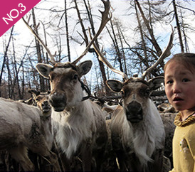 Rencontre avec les Tsaatans au nord de la Mongoilie « les éleveurs des rennes »
